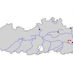 Verspreiding van Roerdomp, broedvogelatlas 2000-2002