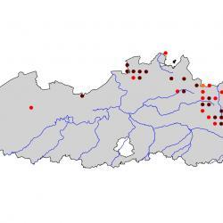 Verspreidingskaart Nachtzwaluw. Kaart afkomstig van de atlas van de Vlaamse broedvogels van 2000 - 2002.