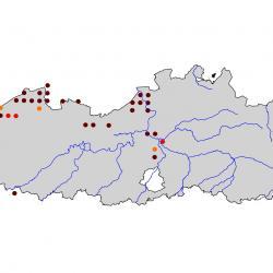 Verspreidingskaart Kluut . Kaart afkomstig van de atlas van de Vlaamse broedvogels van 2000-2002.