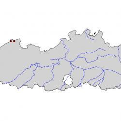 Verspreidingskaart Dwergstern. Kaart afkomstig van de atlas van de Vlaamse broedvogels, 2000-2002.