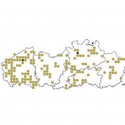 Verspreidingskaart (2007), Ruige dwergvleermuis
