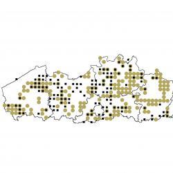 Verspreidingskaart (2007), Gewone en Grijze grootoorvleermuis
