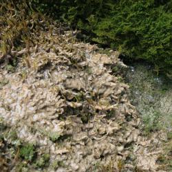 Kalktufbronnen herbergen bijzondere mossoorten, die uitsluitend in dit milieu voorkomen.