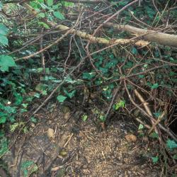 Steenbergse bossen, Zottegem