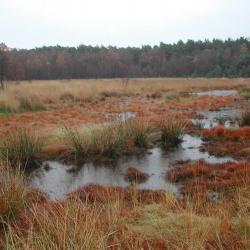 In het verleden zijn de meeste natte heidegebieden in Vlaanderen in meer of mindere mate ontwaterd.