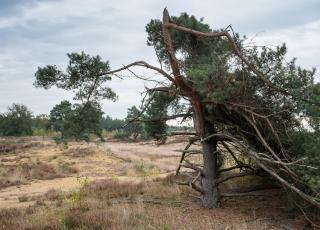Heidelandschap © Kris Thijs