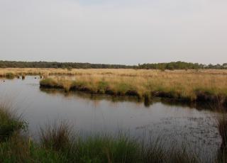 Kalmthoutse Heide (3) © An W.
