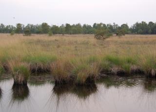 Kalmthoutse Heide (4) © An W.