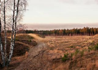 Landschap van goud © Kris Thijs