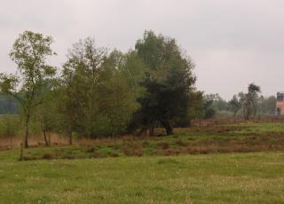 Turnhouts vennengebied (2)