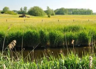 Sigmaplan;wetland; grasland