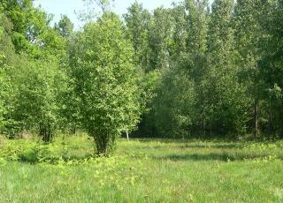 Heischraal grasland in Serskampse bossen in Wetteren