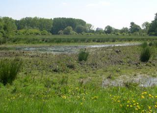 Poel met ruige vegetatie als leefgebied voor de kamsalamander
