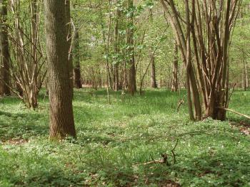 In het Meerdaalwoud komt ook het subtype van rijkere bodems voor.