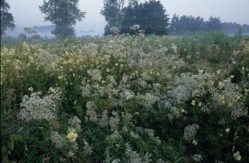 Soortenrijke, natte ruigte in de Vallei van de Zuidleie (Oostkamp).